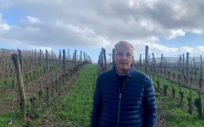 Sangiovese Wine Territory: Pietro Caciorgna Estate, Tuscany